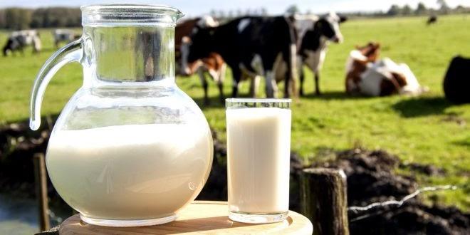 produção de leite